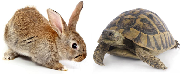 Tortoise & the Hare characters